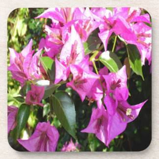Purple Pink Bougainvillia In Blossom Coaster
