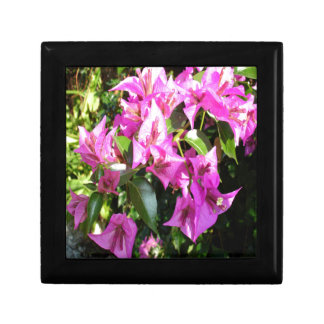Purple Pink Bougainvillia In Blossom Gift Box