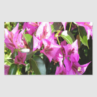 Purple Pink Bougainvillia In Blossom Sticker