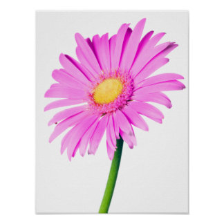 Purple Pink Daisy Customized  Daisies Template Poster