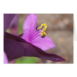 purple plant called spiderwort and a tiny bee card