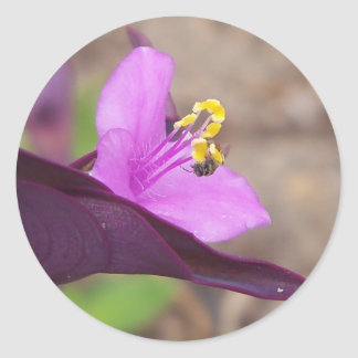 purple plant called spiderwort and a tiny bee classic round sticker