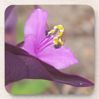 purple plant called spiderwort and a tiny bee coaster