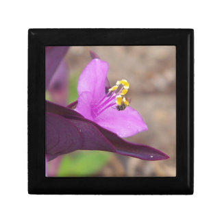 purple plant called spiderwort and a tiny bee gift box