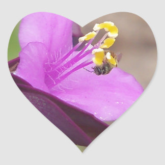 purple plant called spiderwort and a tiny bee heart sticker