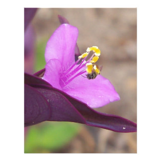 purple plant called spiderwort and a tiny bee letterhead