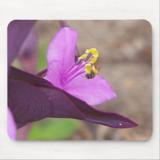 purple plant called spiderwort and a tiny bee mouse pad