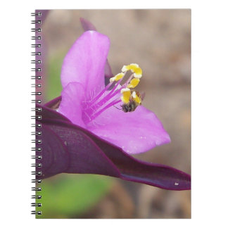purple plant called spiderwort and a tiny bee notebook