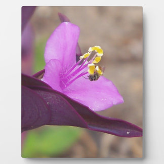 purple plant called spiderwort and a tiny bee plaque