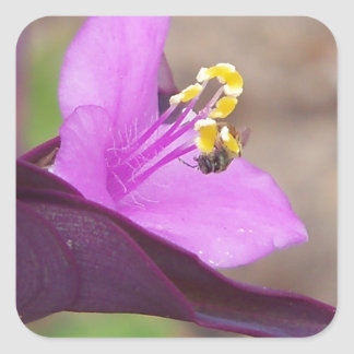 purple plant called spiderwort and a tiny bee square sticker