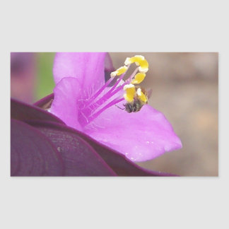 purple plant called spiderwort and a tiny bee sticker