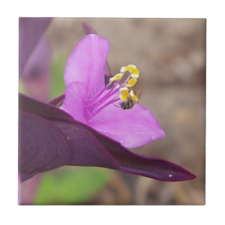purple plant called spiderwort and a tiny bee tile