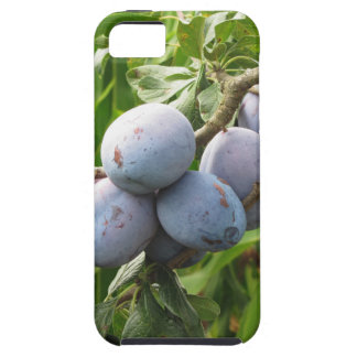 Purple plums hanging on the tree . Tuscany, Italy Case For The iPhone 5