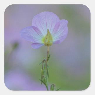 Purple Primrose Square Sticker