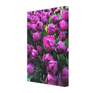 Purple Prince Tulips Canvas Print