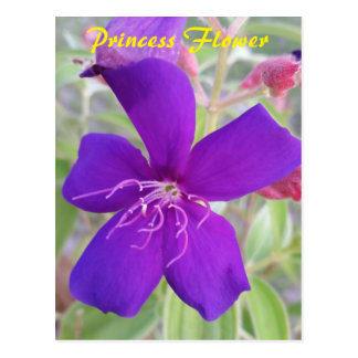 Purple Princess Flower - snail mail postcard