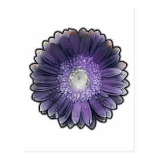 Purple Rain gerbera Postcard