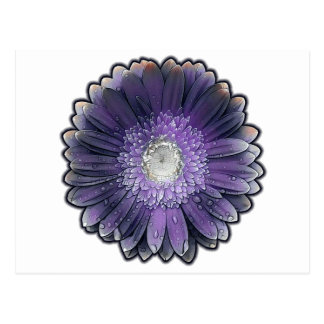 Purple Rain gerbera Postcard