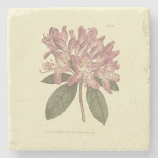 Purple Rhododendron Illustration Stone Coaster