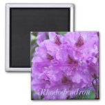 Purple Rhododendrons Magnet
