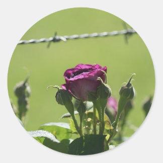 Purple Rose Barbwire Classic Round Sticker