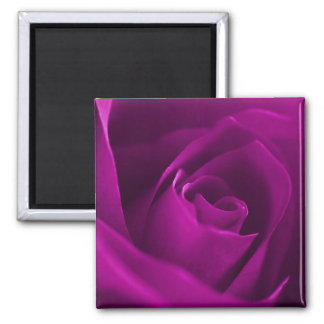 Purple rose blossom macro refrigerator magnets