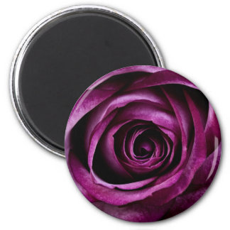 Purple Rose Flower Floral Magnet