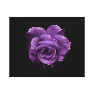 Purple Rose on Black Color Canvas Print
