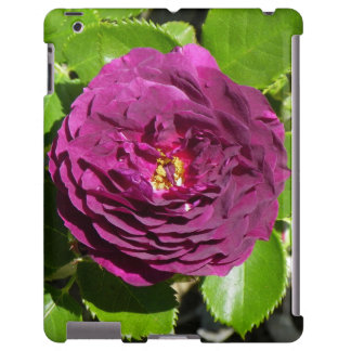 Purple Rose Phone and Tablet