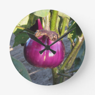 Purple round eggplant hanging on tree round clock