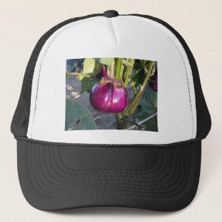 Purple round eggplant hanging on tree trucker hat