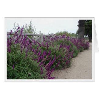 Purple Row Card