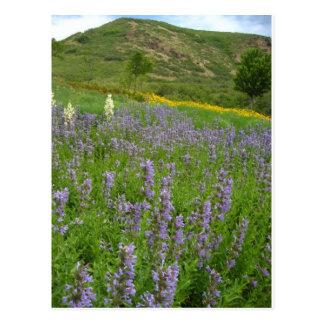 purple scenery postcard