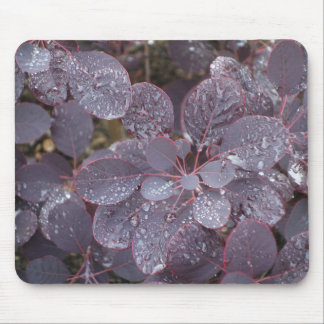 Purple Smoke Tree Leaves Mousepad