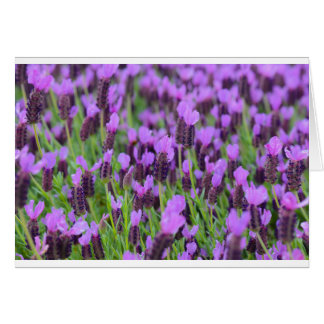 Purple Spanish Lavender Flower Card