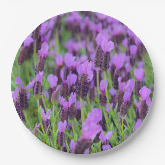 Purple Spanish Lavender Flower Paper Plate