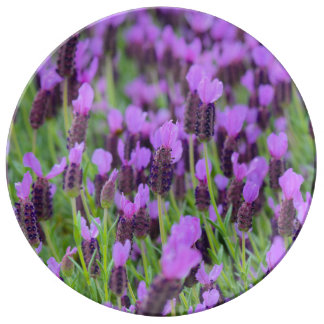Purple Spanish Lavender Flower Plate