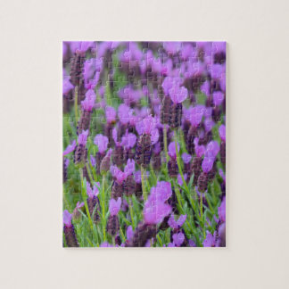 Purple Spanish Lavender Flower Puzzle