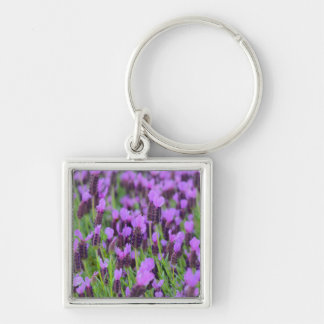 Purple Spanish Lavender Flower Silver-Colored Square Keychain