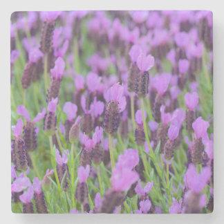 Purple Spanish Lavender Flower Stone Coaster
