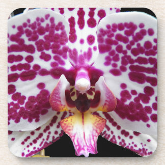 Purple Speckled Moth Orchid Floral Coaster