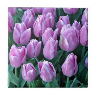 Purple spring tulips tile