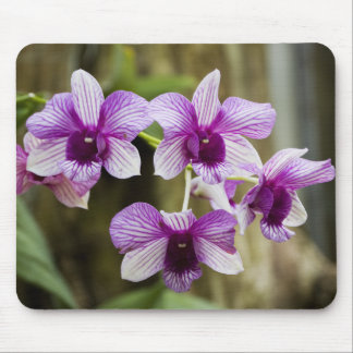 Purple Striped Orchid Flower Mouse Pad