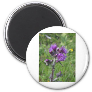 purple thistle magnet