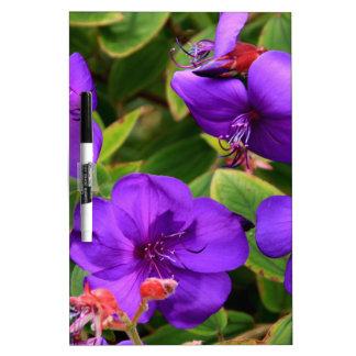 Purple Tibouchina Flowers Dry Erase Board
