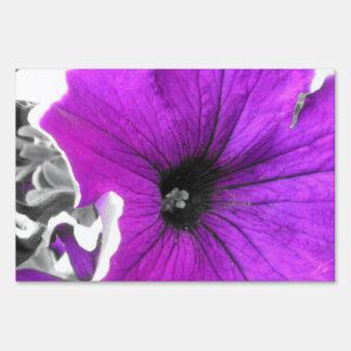 Purple Tinted Black and White Petunias Sign