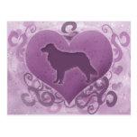 Purple Toller Valentine
