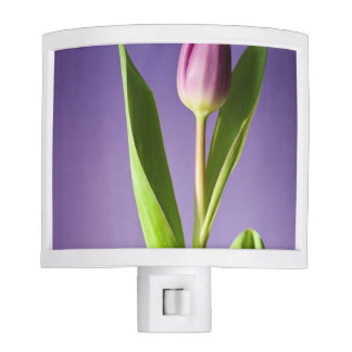 Purple tulip night lite