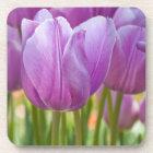 Purple Tulips Blooming in Spring Coaster