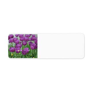 purple tulips forever